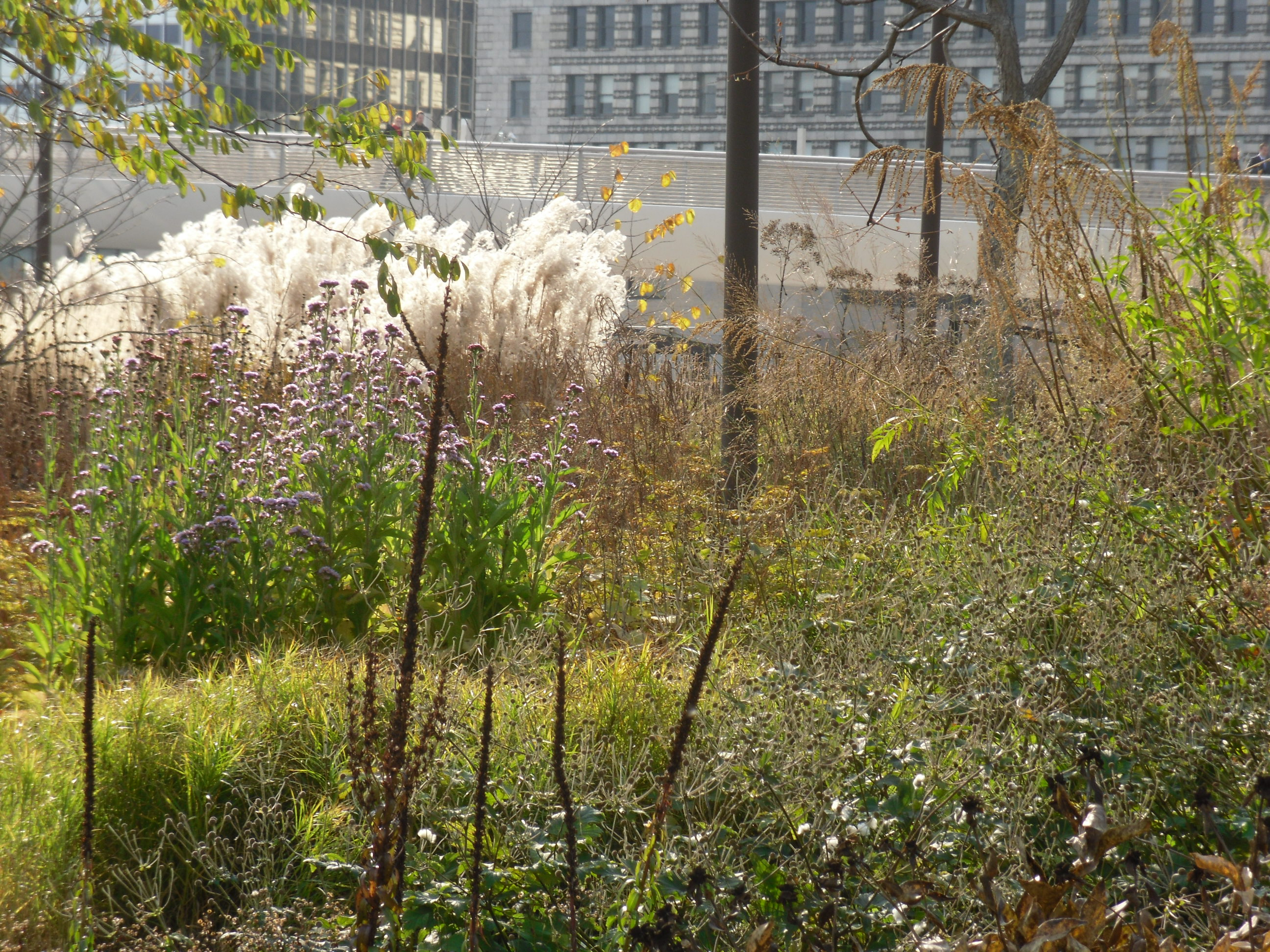 Piet oudolf plantstudios for Piet oudolf fall winter spring summer fall
